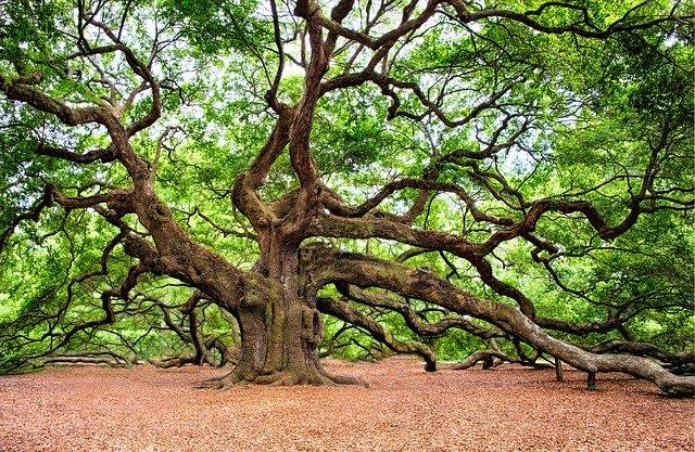 Symbolisme du chêne : un symbole de force et de courage